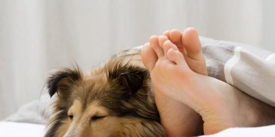 Tewas Karena Berhubungan Dengan Anjing