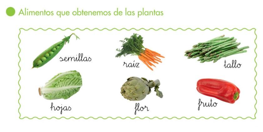 http://primerodecarlos.com/primerodecarlos.blogspot.com/febrero/alimentos_hortalizas.swf