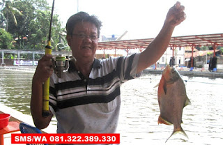 Essen Ikan Bawal Kilo Gebrus