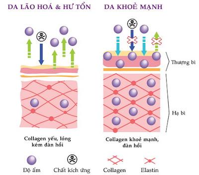 Hình ảnh cấu trúc collagen dưới da