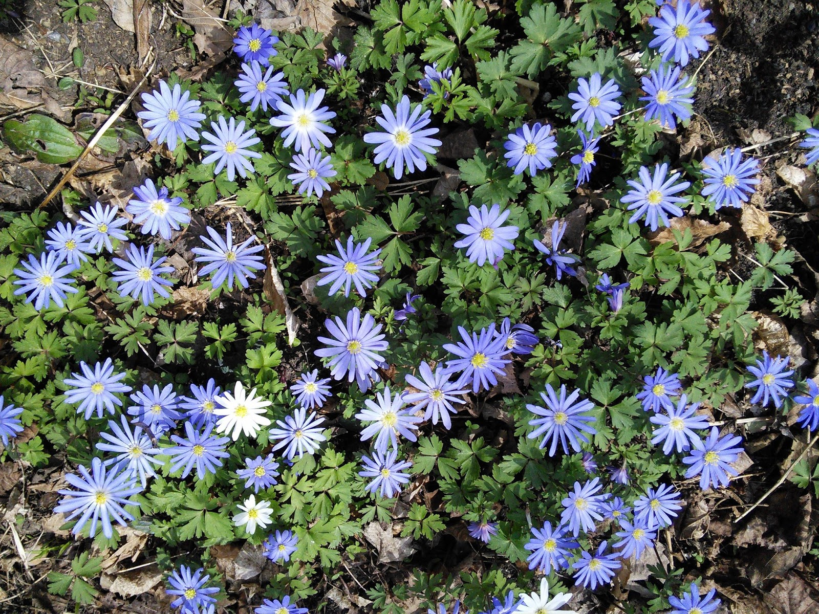 In The Garden Small Area Ground Covers