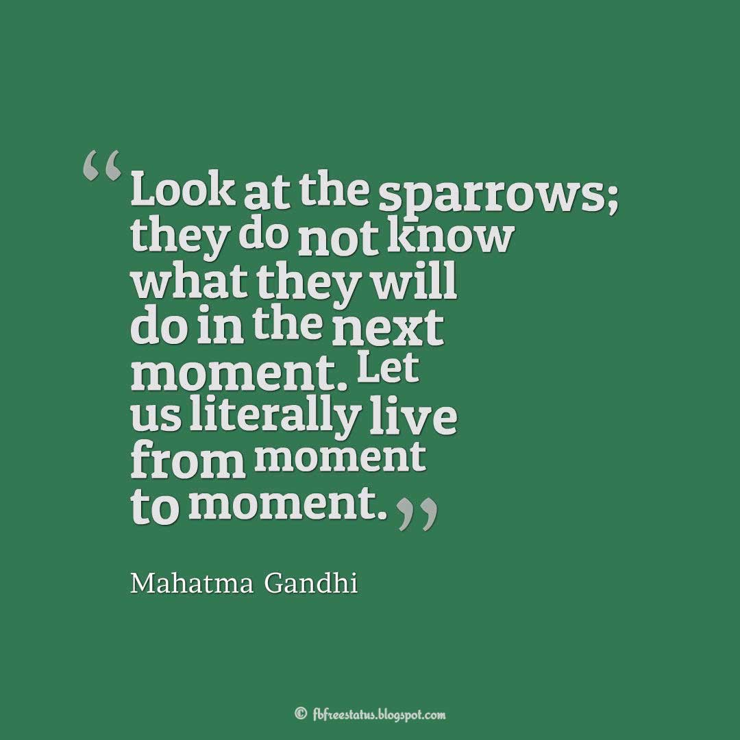 """Look at the sparrows; they do not know what they will do in the next moment. Let us literally live from moment to moment."" – Mahatma Gandhi Quotes about Life"