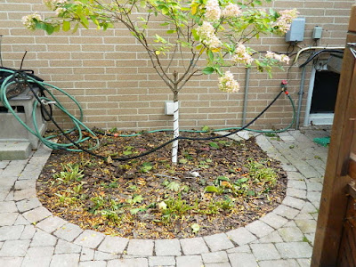 Toronto Fall Cleanup After Don Mills Backyard by Paul Jung Gardening Services--a Toronto Organic Gardening Services Company