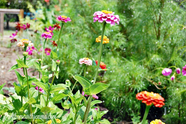 garden-tips-jemma