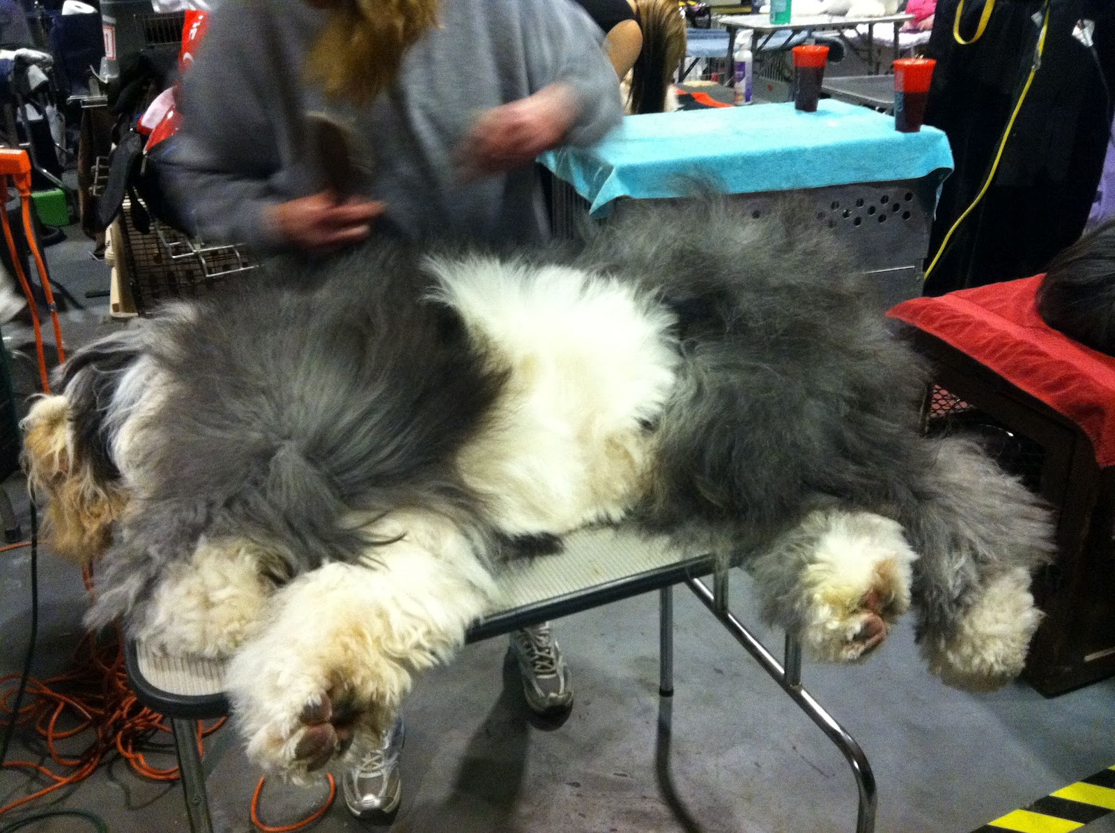 Queer New York: The 136th Westminster Kennel Club Dog Show