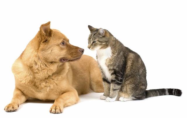 Anjing atau Kucing? Cerdasan mana sih Menurut Sains?
