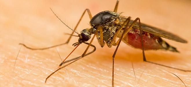 Κουνούπια: 6 κόλπα για να μην σας «τρώνε» τα τσιμπήματα