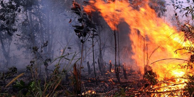 Bakar Hutan di Kalimantan, Petani Asal Kebumen Ditangkap Polisi