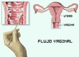 Le eyaculo vagina a madura nalgonsisima - 1 7