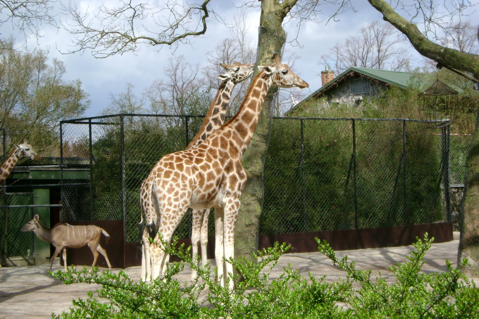 prescott 39 s overseas adventures the hamburg zoo. Black Bedroom Furniture Sets. Home Design Ideas