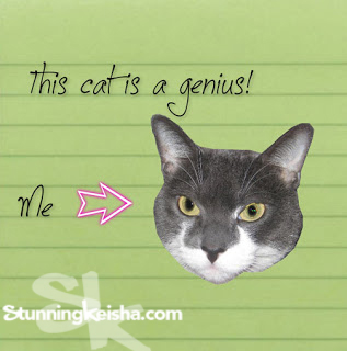 Counting Cat: This Cat is a Genius