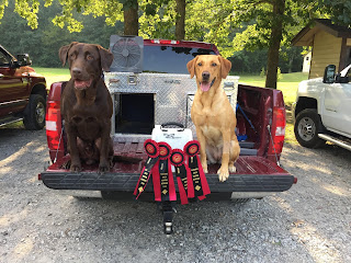 K and R Labradors: Owners and Companions