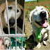 Story of the dog who suffered so much because of his face & the sudden that changed his life to happy life