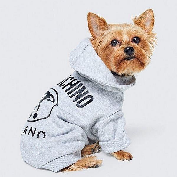 Aperçu collection H&M et Moschino, vêtements pour chien
