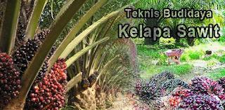 Teknik Budidaya Kelapa Sawit