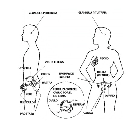 curiosity rover diagram