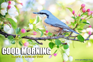 Good morning have a great day messages spring bird and small pink flowers