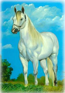 quadro de cavalo branco