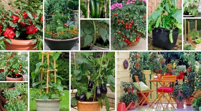 Πως θα καλλιεργήσετε Καλοκαιρινά Λαχανικά σε Γλάστρες