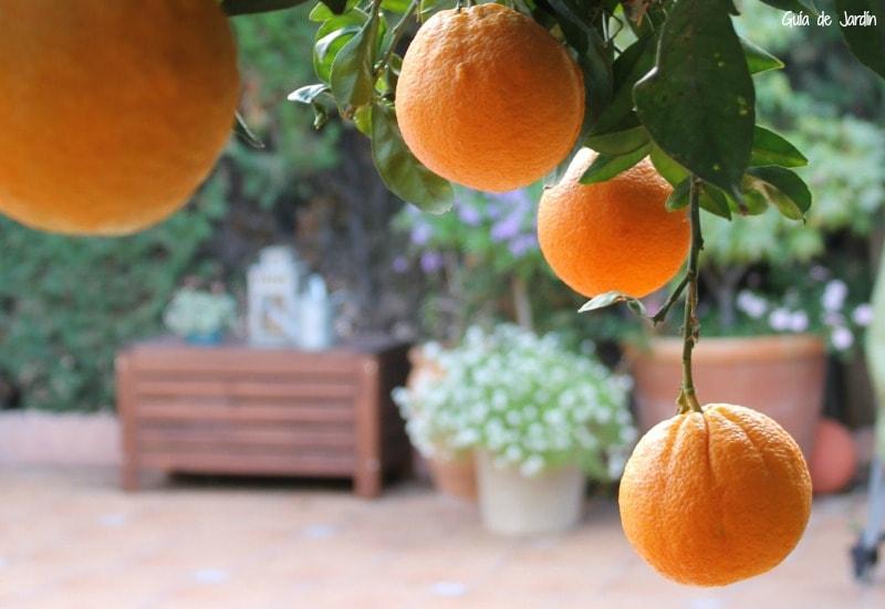 Naranjas en invierno