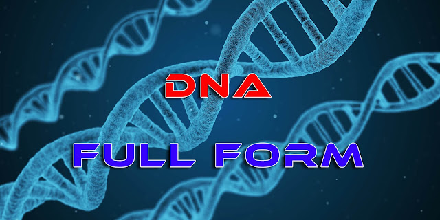DNA Full Form(Full Form Of DNA)