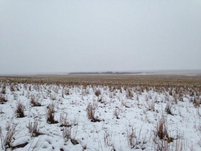 Σε αυτή την φωτογραφία υπάρχουν 500 πρόβατα