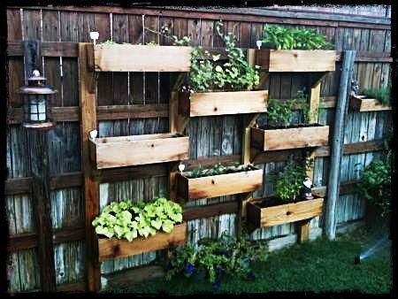ogród pionowy