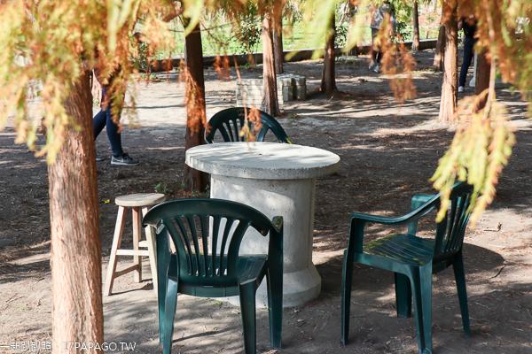 泰安落羽松|台中后里熱門拍照打卡景點,還佈置拍照設施和休息區