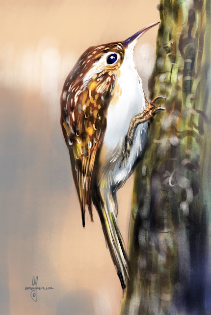Treecreeper bird painting by Artmagenta