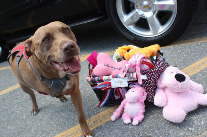 These 25 Brave Dogs Turned Out To Be Heroes