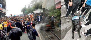 Drogpo, the Labrador runner to beat Darjeeling Toy Train