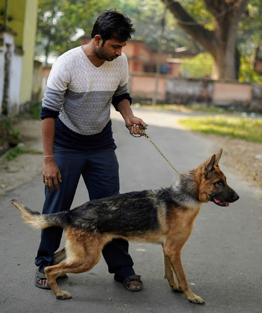 German Shepherd Clicked By Sourajit Saha 6