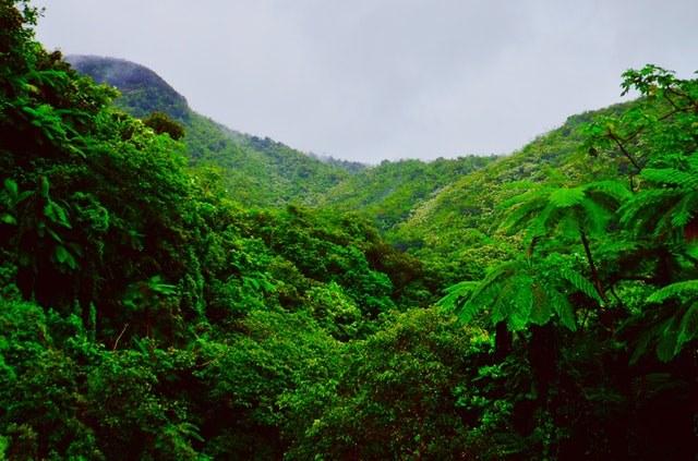 Rainforest in Puerto Rico, the Caribbean