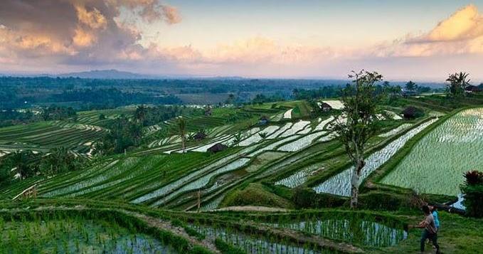 Pemandangan Desa Persawahan, Keindahan Sawah