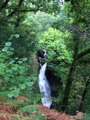 Aira force waterfall surrounded by woodland