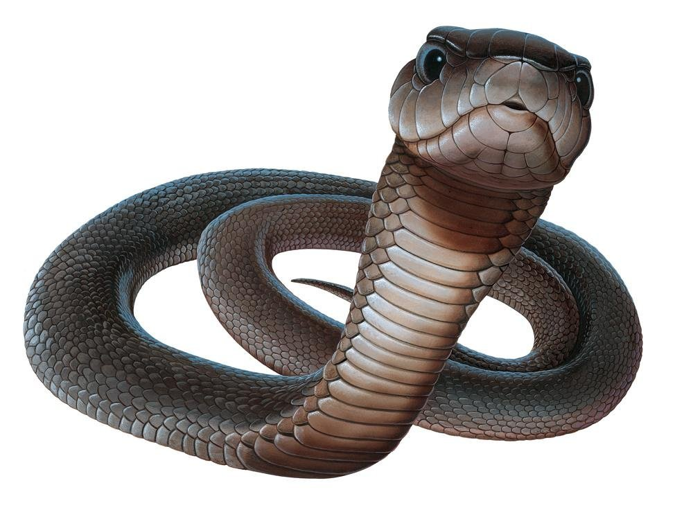 how to draw a black mamba snake