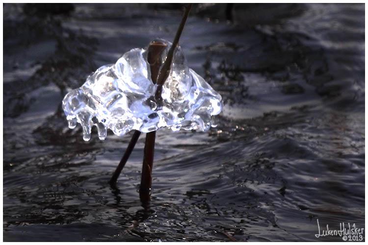 a621aa4481a IJs & Zwart Water. Veel wind en temperatuur rond het vriespunt zorgden de  afgelopen voor deze ijssculpturen aan rietstengels in Westerwolde