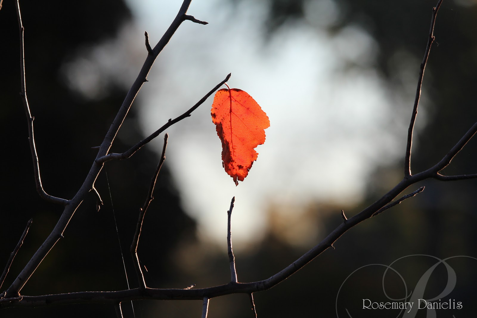 targonska stylistics the short story the last leaf by o henry judjing by the title i can say that the story can be about the last moments of somebody s life