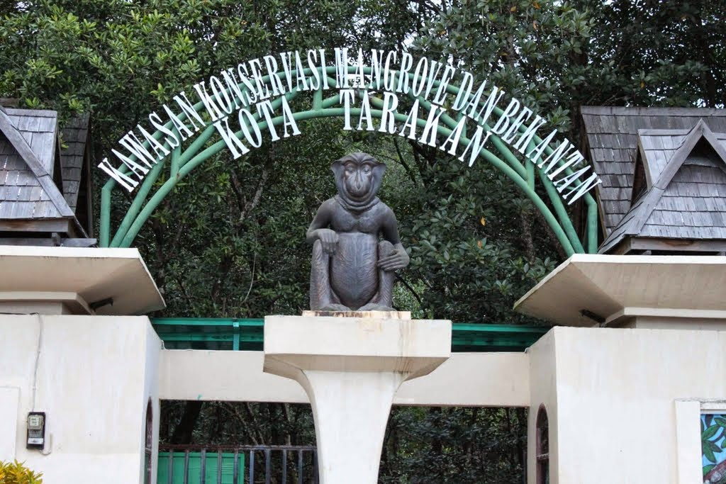 ketika anda berkunjung ke kota tarakan maka objek wisata yang satu ini wajib untuk masuk dalam daftar kunjungan kawasan konservasi hutan mangrove