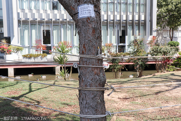 后里中科崴立機電櫻花公園綠萼櫻和八重櫻登場,櫻花步道好好拍