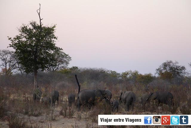 Explorando a FAIXA DE CAPRIVI, entalada entre a Namíbia, Botswana e Angola | Namíbia