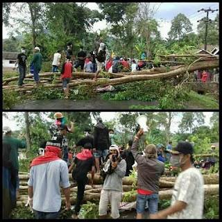 Pohon Ditumbangkan, Jalan Trans Sulawesi Lumpuh Total