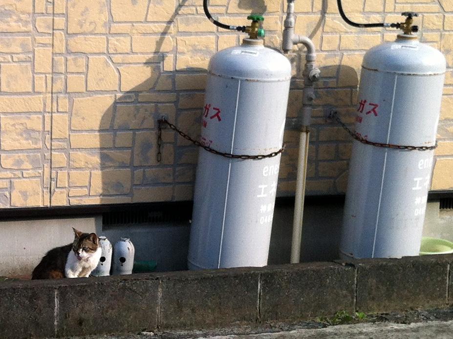 伊勢原研究所(=^・^=) こま猫: べろ猫と猫の車 伊勢原研究所(=... 伊勢原研究所
