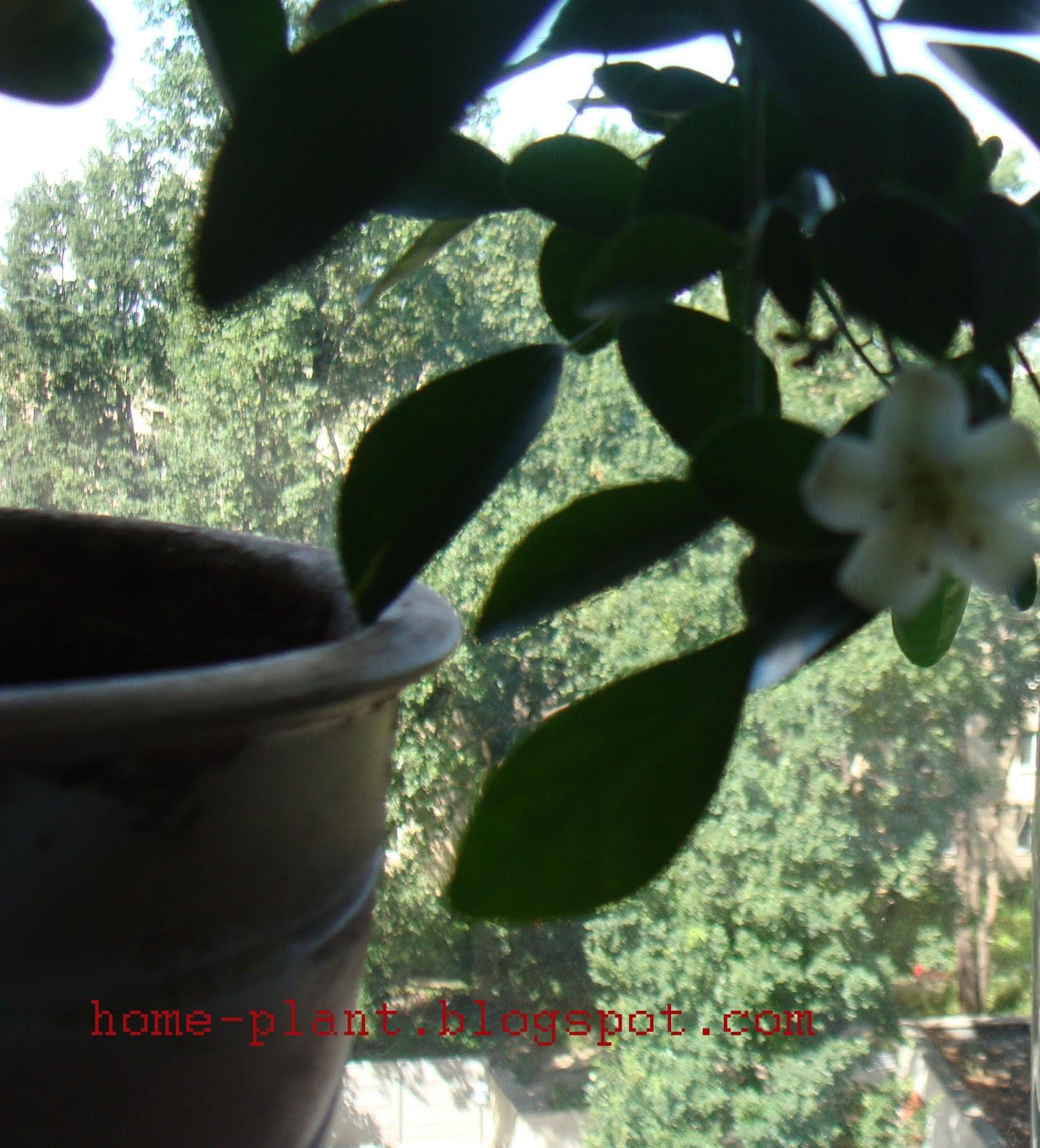 Студия цветов 55 на петровке