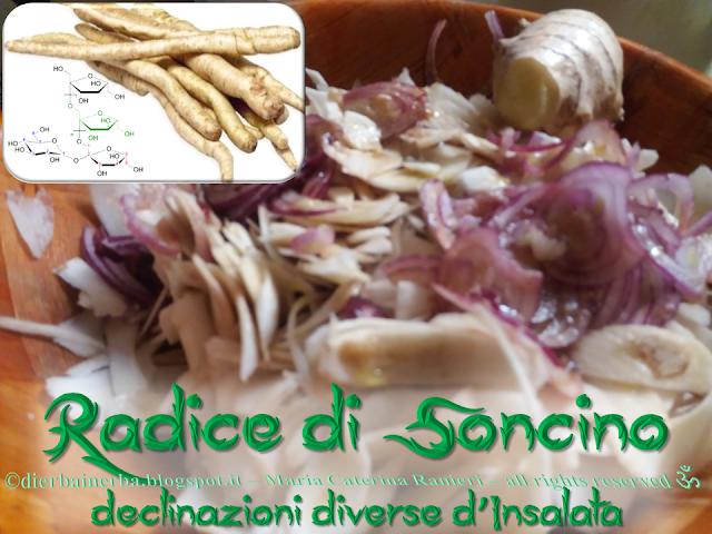 Radice amara di Soncino - declinazioni diverse d'insalata