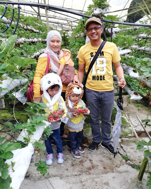 RAYA KEEMPAT AIDILFITRI TEAM MUSTARD DI KOK LIM STRAWBERRY PARK CAMERON HIGHLANDS