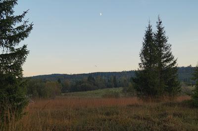 torfowisko Tarnawa