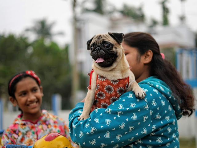 Pug Captured By Sourajit Saha 2