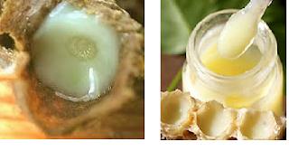 Sữa ong chúa tươi nguyên chất là dịch thể lỏng sệt, màu trắng hoặc vàng