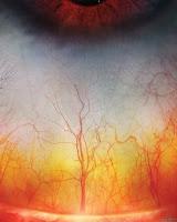 глаз человека увеличенный